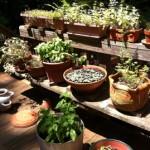Grow a kitchen herb garden in pots!