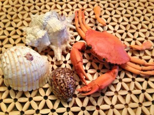 Crabs and Shells bring beach memories!  (Photo Credit: Adroit Ideals)