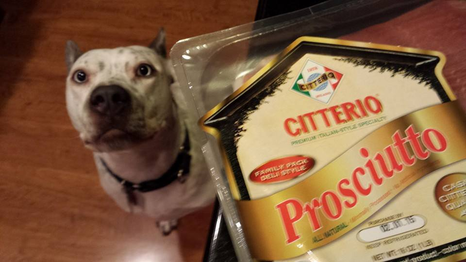 Our dog Atticus is quite a fan of fancy Citterio prosciutto ham (Photo Credit: Adroit Ideals)