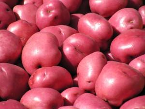 Red Potatoes grown by Knutzen Farms (Photo Credit: knutzenfarms.com)